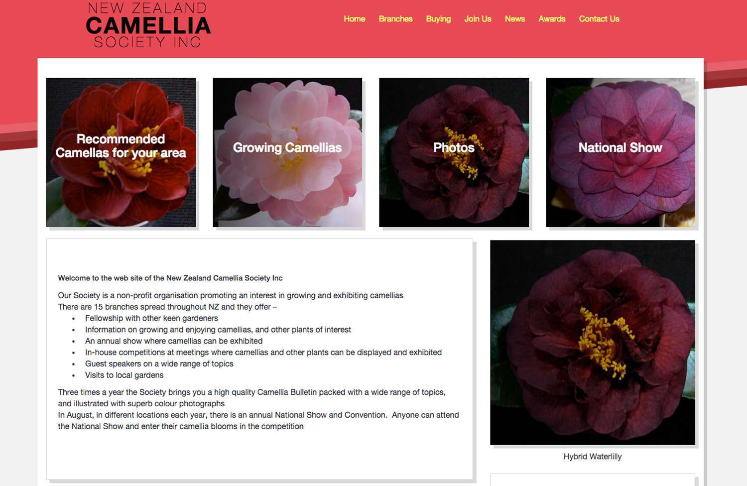 New NZ Camellia Society Inc site launched by Inbox Design preview 0