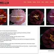 New NZ Camellia Society Inc Launched